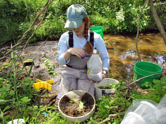 Katie Billé working with a composite macroinvertebrate sample next to a stream.