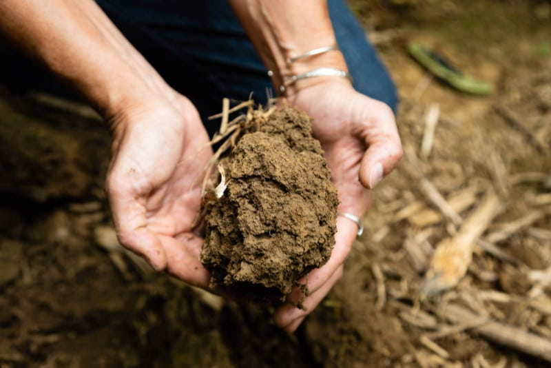 Two hands holding a clump of soil in a no-till farm field.