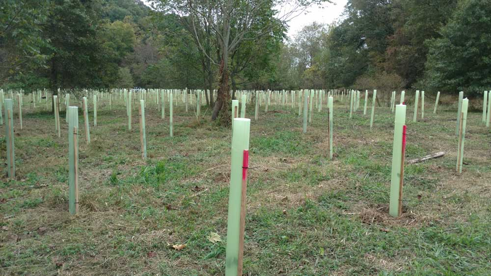Volunteers Plant 1,000 Trees in Coatesville