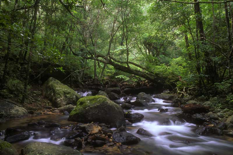 Photo of Rio Cacao, Costa Rica, by Mayra Stroud