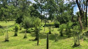 The Riparian Buffer Arboretum showcases woody species that are proven performers for floodplains.